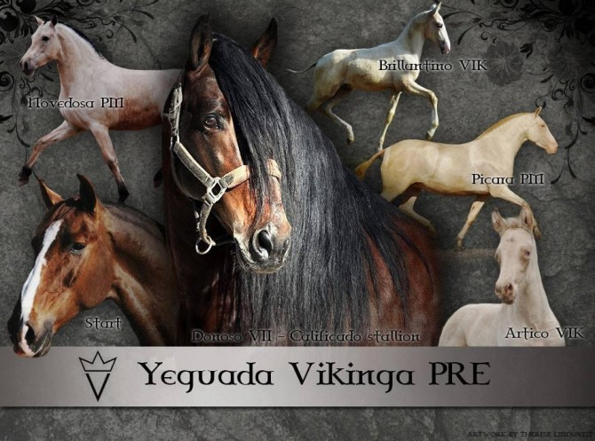 Welcome to our social medias - Yeguada Vikinga PRE