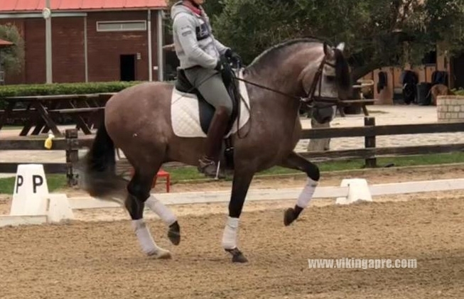 - Vikinga Sales & Breeding